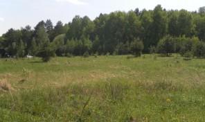 Участок в селе Страхово, Заокского района Тульской области.