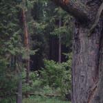 tyapkino_41_20130313_1255247964