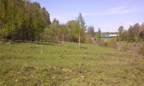 Участок в деревне Гибкино